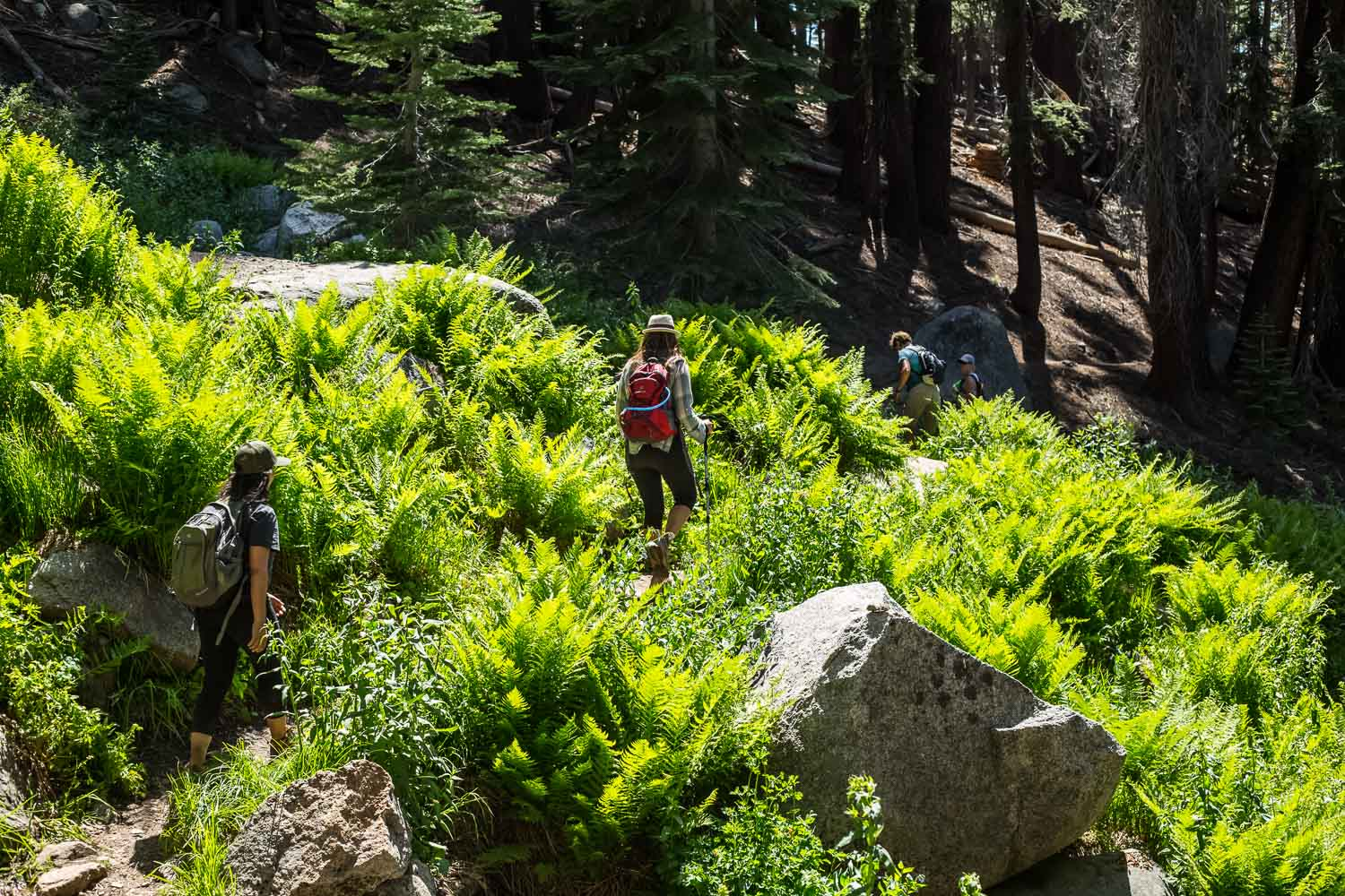 hiking-sequoia-meadows